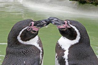 320px-Penguincotswoldwildlifepark