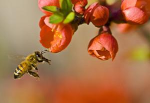 640px-Pollinationn